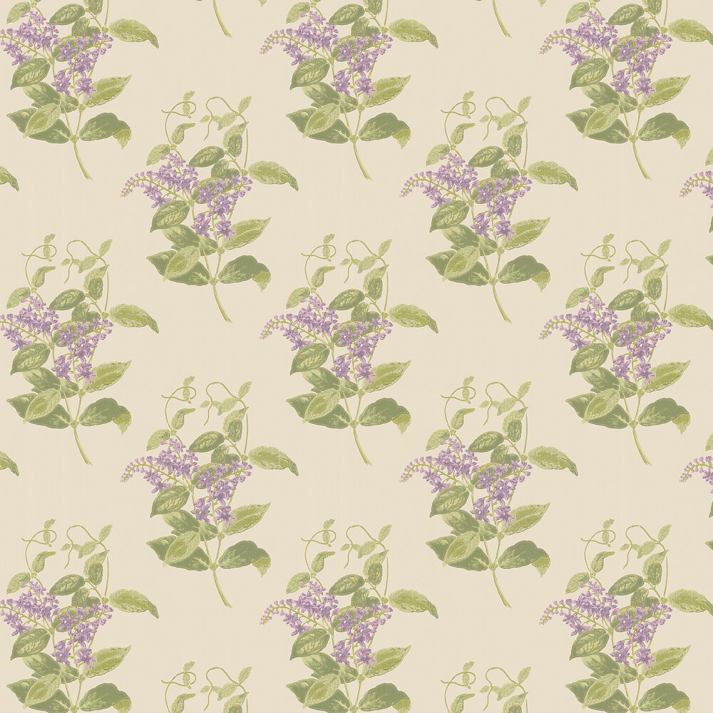 Madras Violet  Wallpaper - Olive and Lavender - by Cole & Son