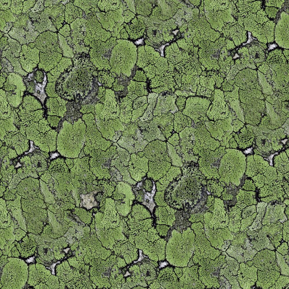 Coordonne Liquen Green Wallpaper - Product code: 5800062