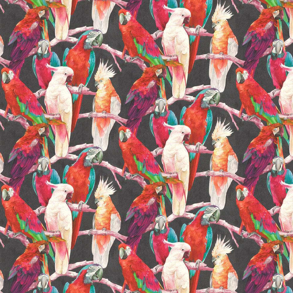 Albany Parrots Multi / Black Wallpaper - Product code: 803129