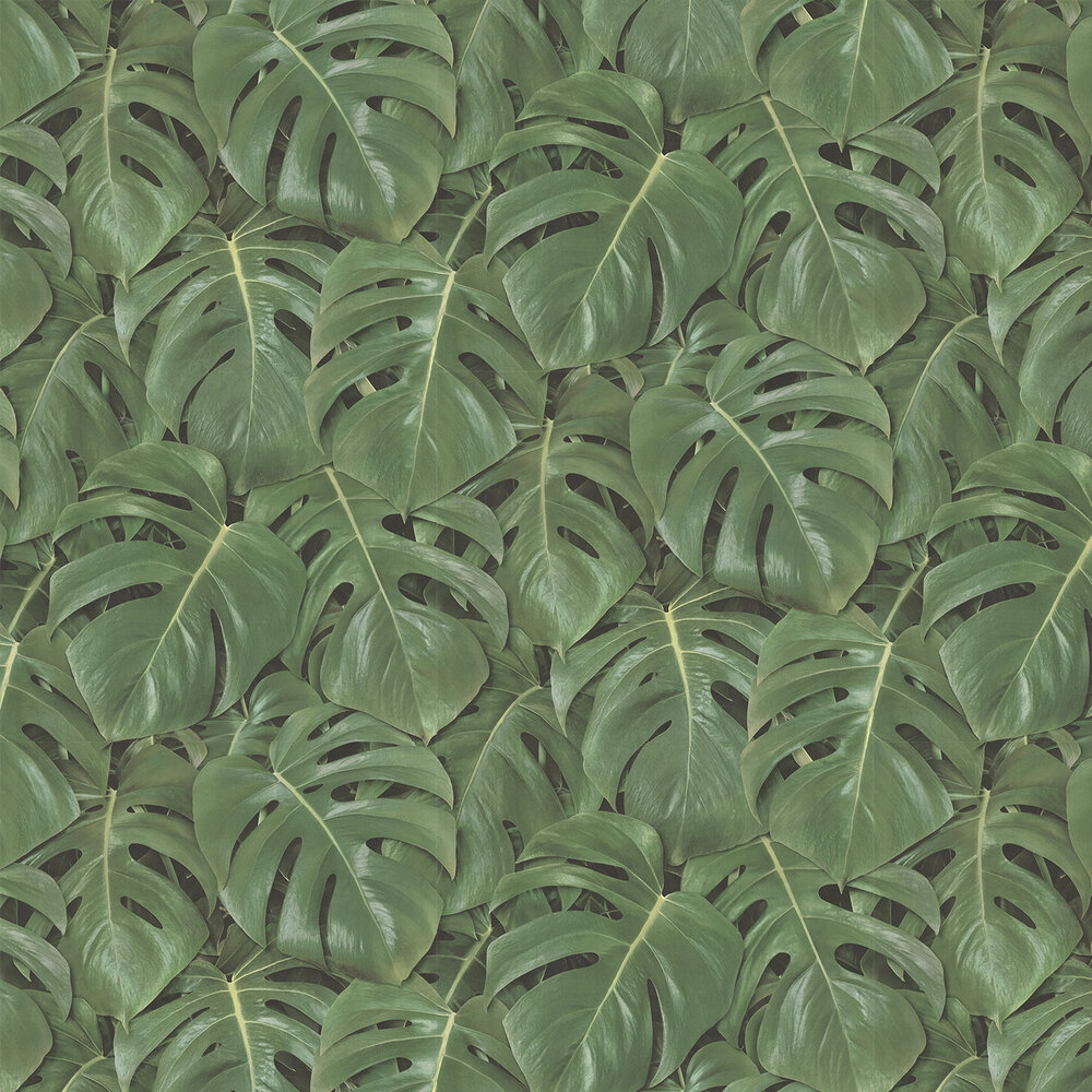 Rainforest Wallpaper - Green - by Albany
