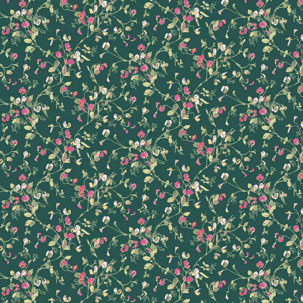 Cole & Son Sweet Pea Cerise / Magenta Wallpaper - Product code: 115/11033