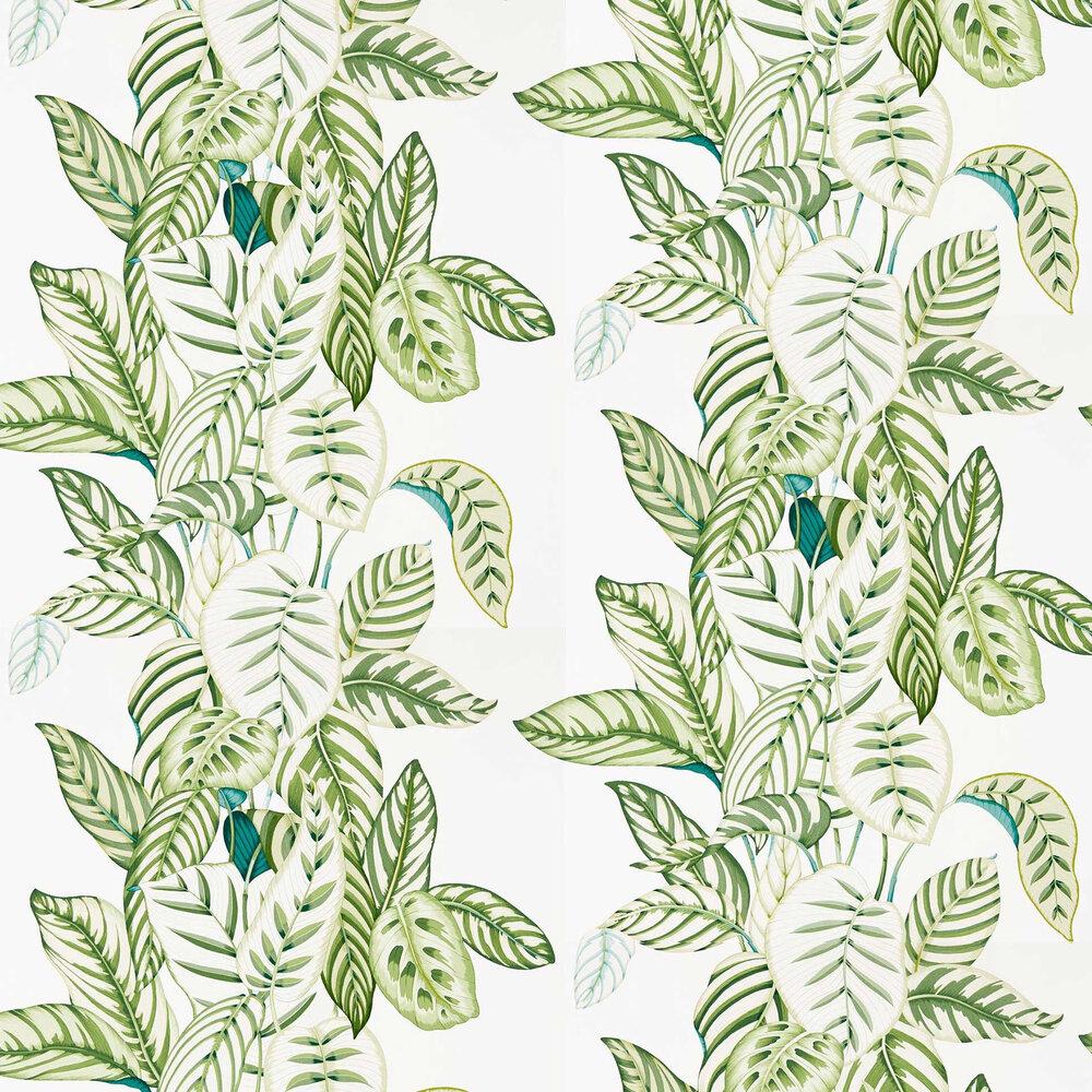 Sanderson Calathea Botanical Green Wallpaper - Product code: 216630