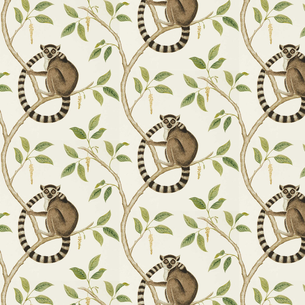 Sanderson Ringtailed Lemur Cream / Olive Wallpaper - Product code: 216664
