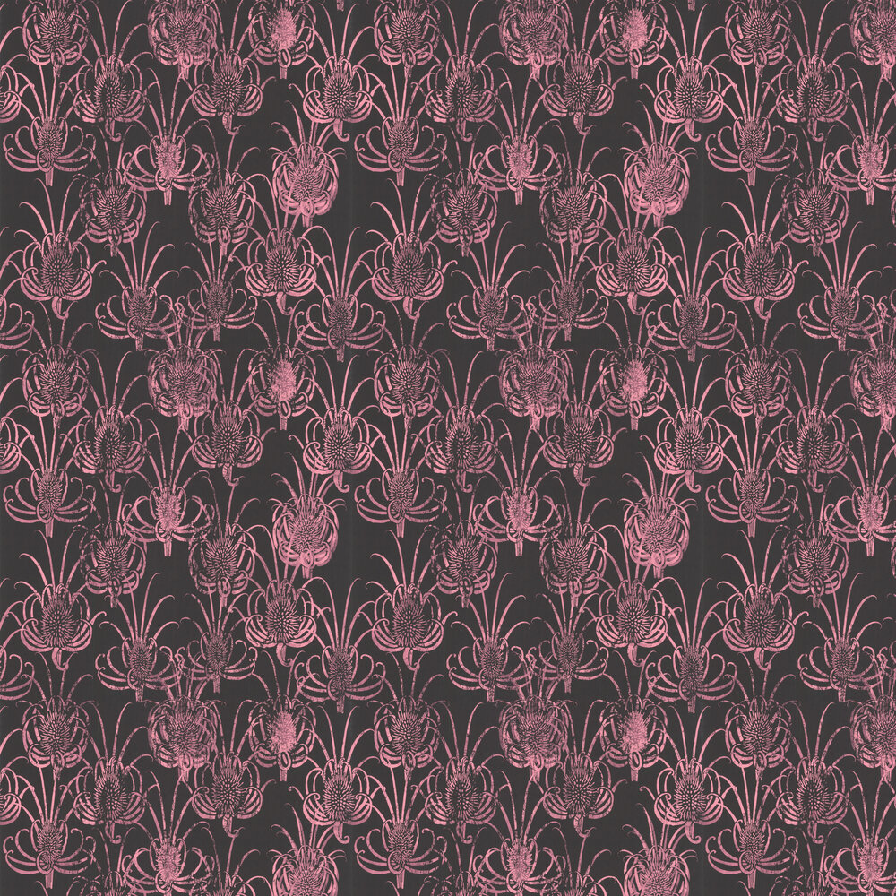 Les Centaurees Wallpaper - Pink/ Black - by Christian Lacroix