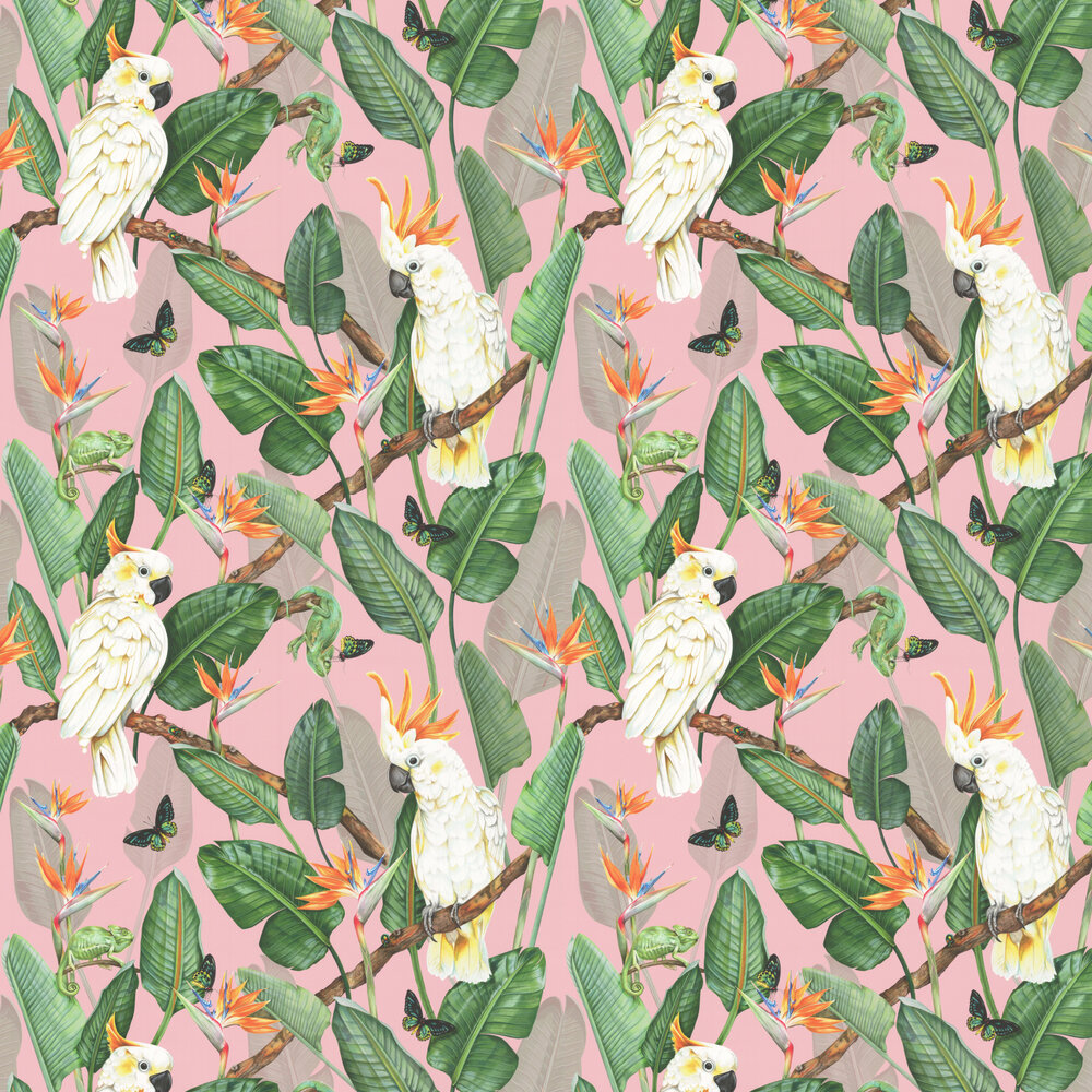 Birds of Paradise Wallpaper - Watermelon - by Isabelle Boxall