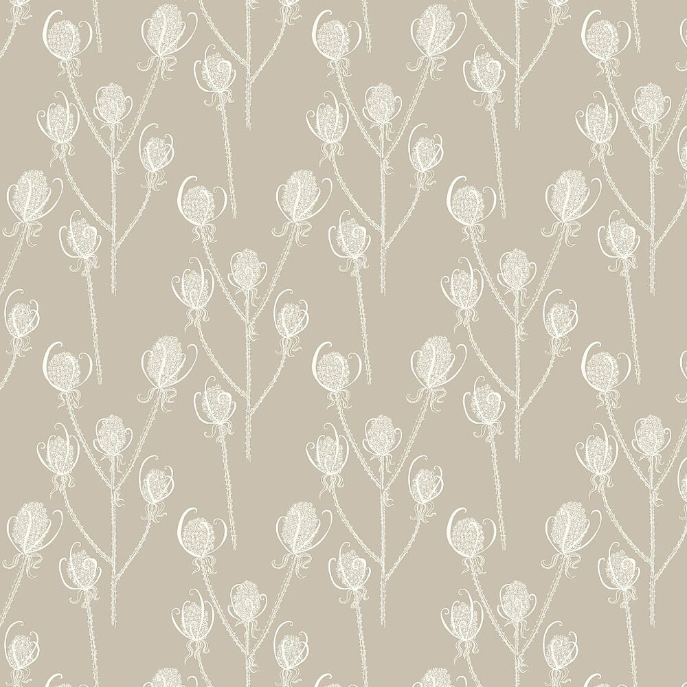 Hubbard and Reenie Teasels - Cream Tea Cream / Soft Brown Wallpaper - Product code: TSL5