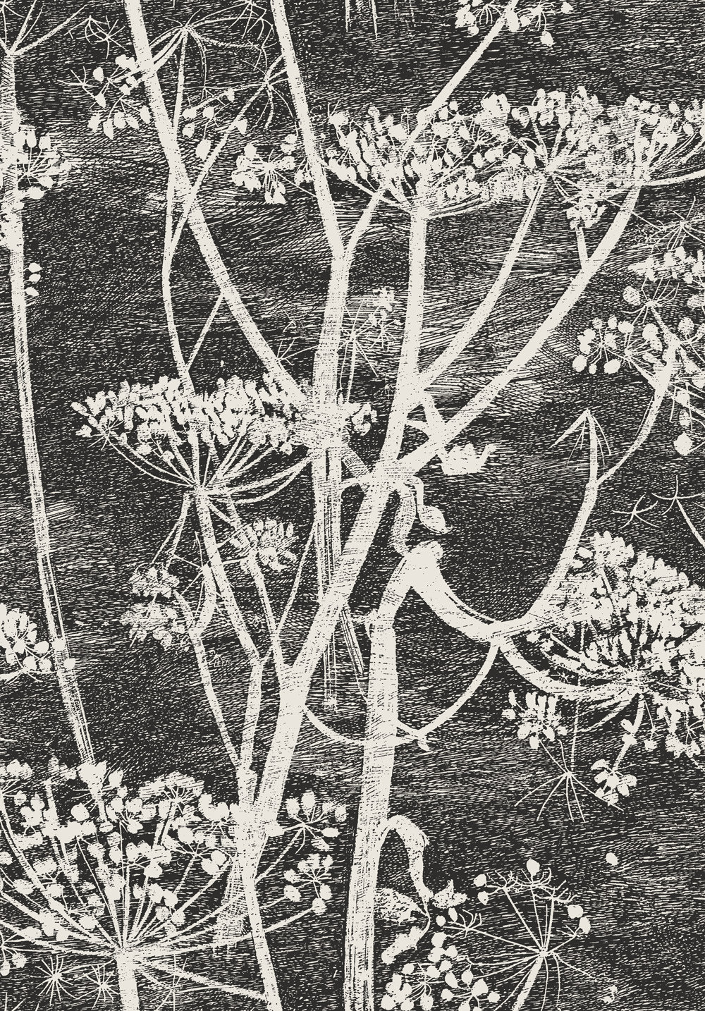 Cole & Son Cow Parsley Black / White Wallpaper main image
