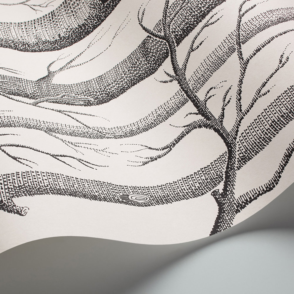 Woods By Cole Son Black White Wallpaper 6912147
