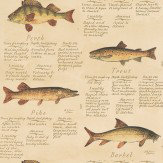 Lewis & Wood European Freshwater Fishes 1846 Brown Wallpaper