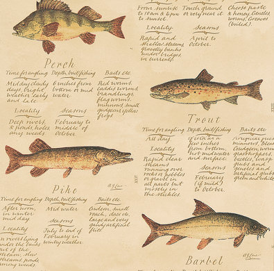 European Freshwater Fishes 1846