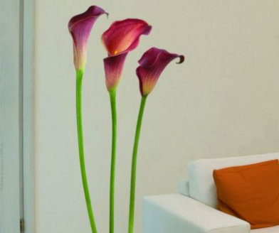 Creative Wall Art Stickers Large Arum Lily Sticker 160817