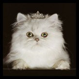Arthouse Princess Kitten Art - Product code: 000309