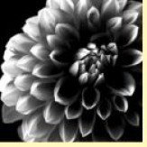 Arthouse B&W Floral Set of 3 Art - Product code: 000312