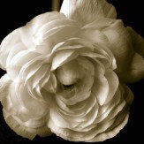 Arthouse Sepia Floral Art - Product code: 000307