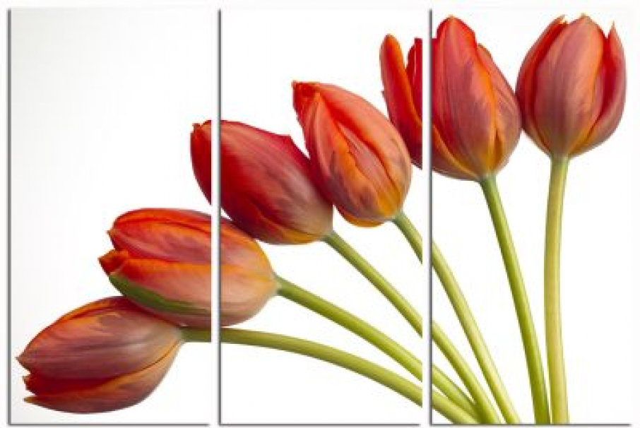 medieval art wallpaper. Art Wallpaper Large Red Tulips triptych 000527 Three individual canvases