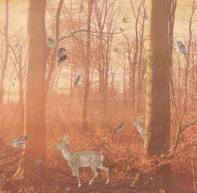 Mr Perswall Magical Forest Mural - Product code: P011401-6