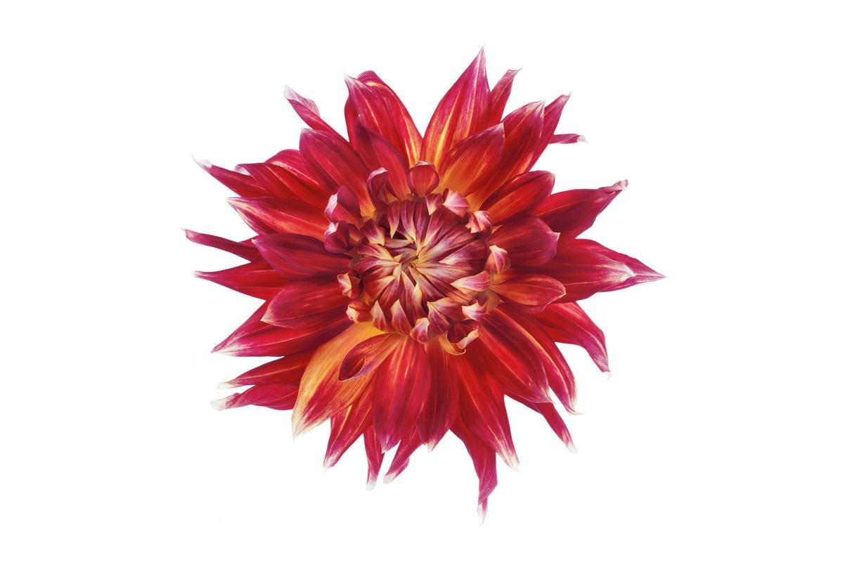 Mr Perswall Earthly Star Mural - Product code: P021401-W