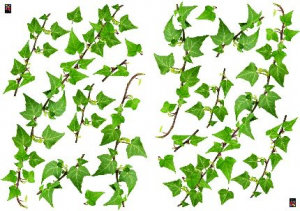 Image of Creative Wall Art Stickers Medium Ivy stickers, 160722