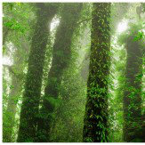 Mr Perswall Rainforest Mural - Product code: P111701-8