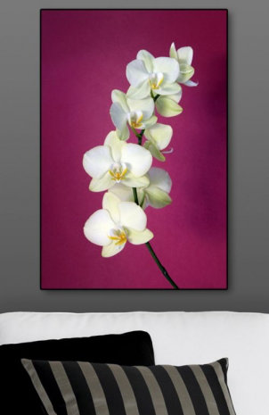 Image of Graham & Brown Art Fuschia Orchid, 40-413
