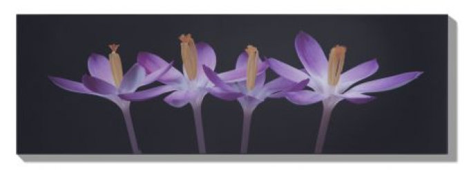 Image of Graham & Brown Art Crocus Embrace, 40-066
