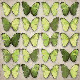 Arthouse Green Butterflies Art - Product code: 000811