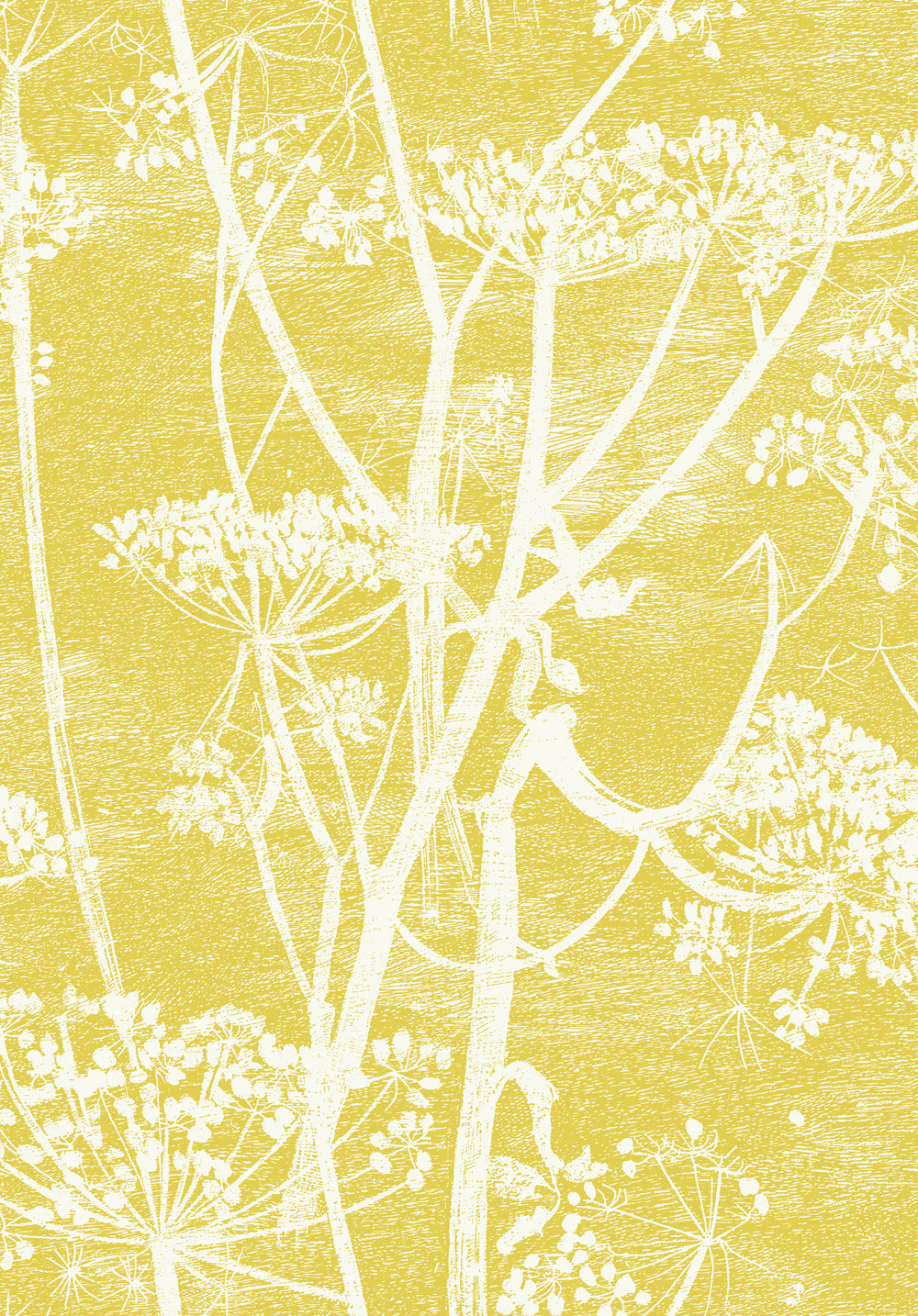 Cole & Son Cow Parsley Citrus Wallpaper main image