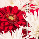 Arthouse Red / White Chrysanthemums set of 3 Art