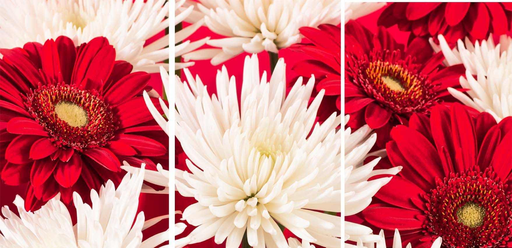Arthouse Red / White Chrysanthemums set of 3 Art - Product code: 002559