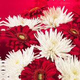 Arthouse Red / White Chrysanthemums triptych Art