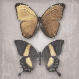 Arthouse Black and Gold Butterflies set of 3 canvases Art