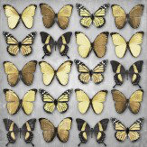 Black and Gold Butterflies canvas
