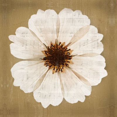 Image of Arthouse Art Anemones 1 Printed Canvas, 002577
