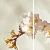 Arthouse Sepia Blossom Triptych Art
