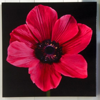 Arthouse Art Outdoor Art  Pink Anemone 002588