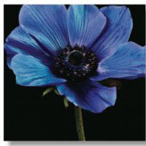 Arthouse Outdoor Art - Blue Anemone - Product code: 002589