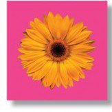 Arthouse Outdoor Art - Hyper Gerbera set of 3