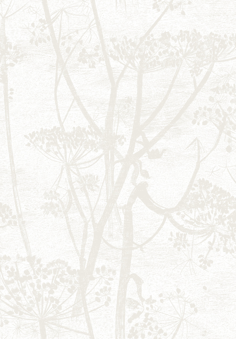 Cole U0026 Son Cow Parsley Off White Wallpaper Main Image