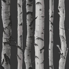 Albany Nordik Wood Silver Grey Wallpaper - Product code: 31052
