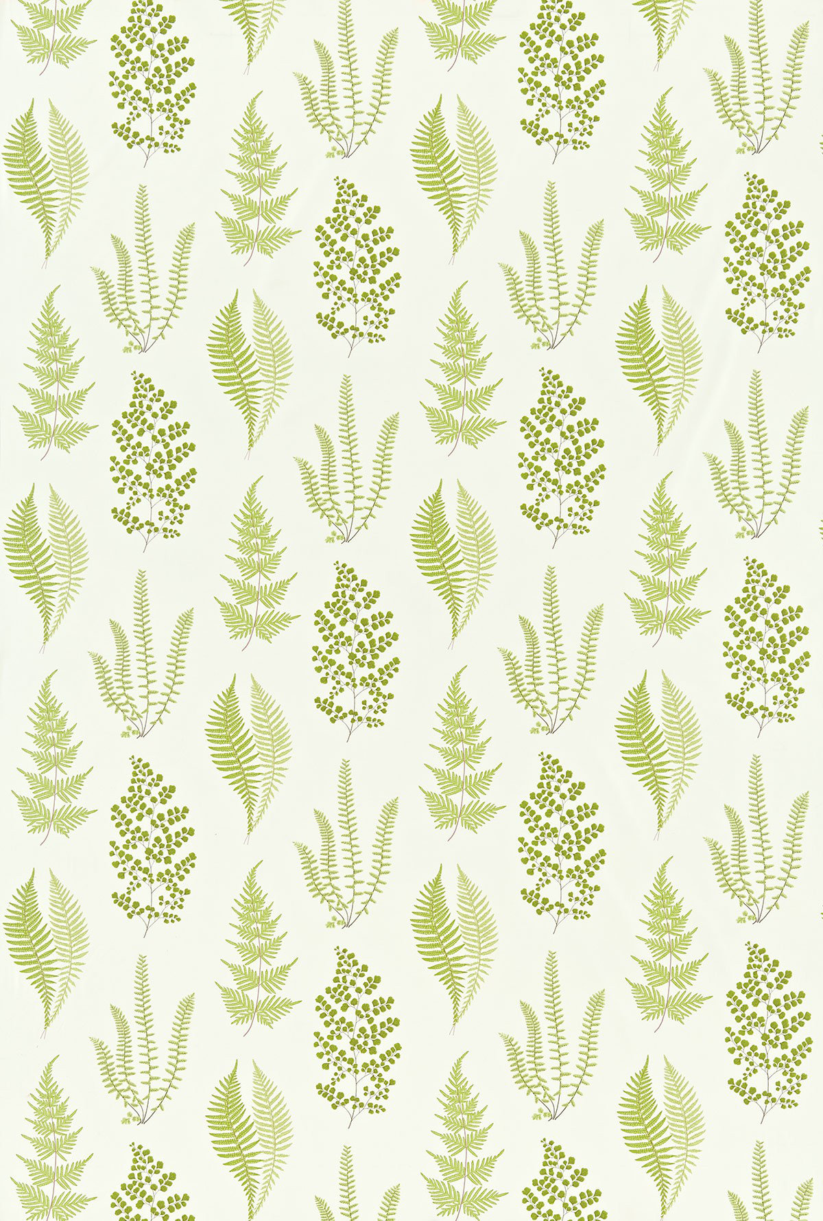 Angel Ferns Olive By Sanderson Wallpaper Direct