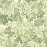 Cole & Son Great Vine Light Green Wallpaper - Product code: 98/10046