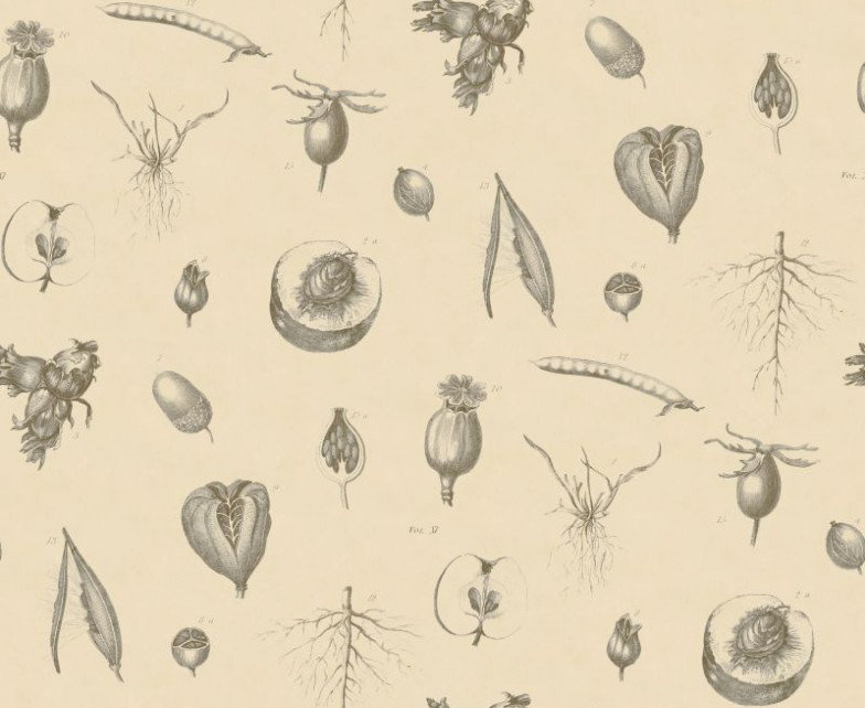 Linwood Wallpapers Roots & Fruits LW501