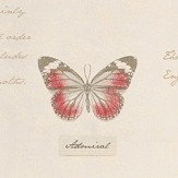 Albany Butterfly Cream Wallpaper