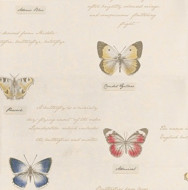 Albany Butterfly Cream Wallpaper main image