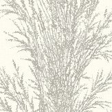 Galerie Pampas Grass Cream Wallpaper