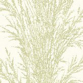 Galerie Pampas Grass Green Wallpaper