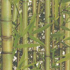 Albany Bamboo  Green Wallpaper