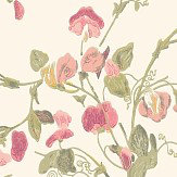 Cole & Son Sweet Pea  Pink Wallpaper