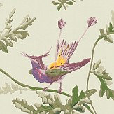 Cole & Son Hummingbirds  Green Multi-Colour Wallpaper