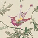 Cole & Son Hummingbirds  Original Multi-Colour Wallpaper